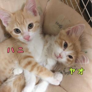 参加ねこのご紹介(ハニ&ヤオ&モン)