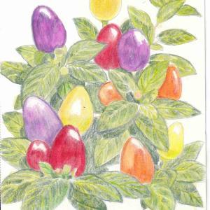 大人の塗り絵 かわいい花と実