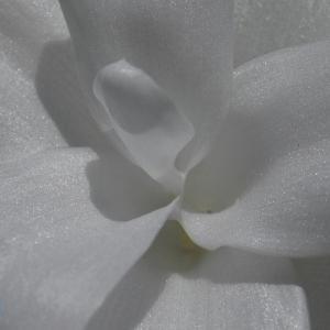 EOS R6、異次元の白の美しさと階調の豊かさ