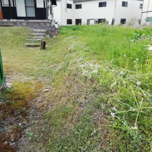 田舎暮らしの定番メニューの、草刈りです(>_
