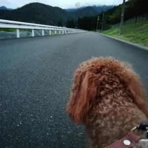 空はどんより、でも雨は降らないから^^)、茶々^^)とお散歩~。