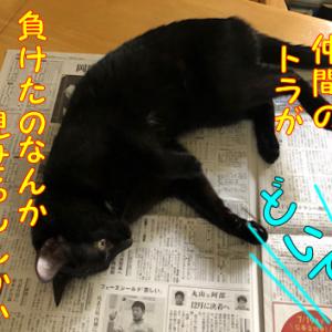 絶妙のタイミングでピンポイント、新聞の読みたいところを占拠する猫