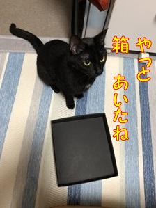 狭いのがたまらない!~猫と箱との素敵な関係(3)~