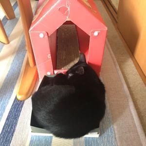 夏バテ気味の猫も元気にする、ひと工夫の手作りおもちゃ