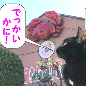 世界で一番吞気な、「Go To Eat」体験記 ~猫だって、イタリアン!