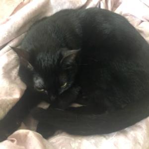 """朝寝する猫の""""逆『寝床』""""に、人間は小弱り…。~猫柄シーツでも、遊んでみました!~"""