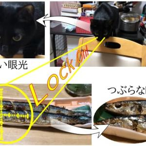 高値傾向が続く庶民の味・秋刀魚、落語で楽しく満喫しよう!