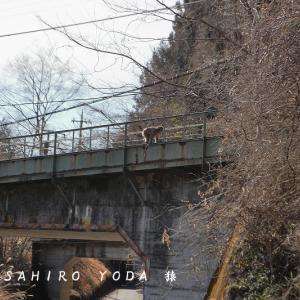 野生の猿(群馬県安中市)