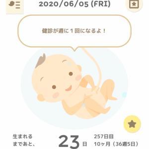 36w5d 妊婦検診