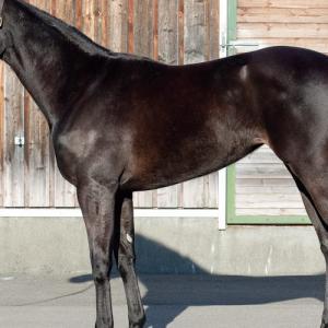 ロッシェノワールの18の出資検討-シルク2019第2回追加募集馬