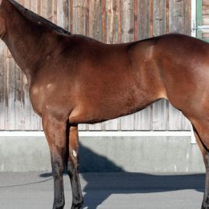 カレドニアレディの18出資検討-シルク2019第2回追加募集馬