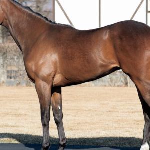 メリーウィドウの18出資検討-シルク2019第2回追加募集馬