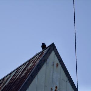 バードウォッチャーを見てる鳥