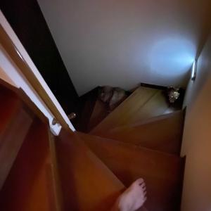 【弁当・猫】毎夜潜む階段の猫踏まない対策。無印良品