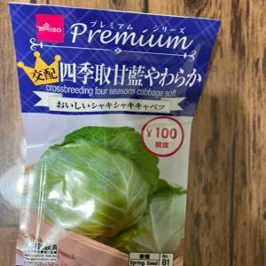 【家庭菜園・猫・弁当】キャベツの種植えすぎちゃったけど大丈夫かな……??