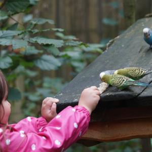 飼い鳥の体重管理、早食いをしてしまう理由を解説