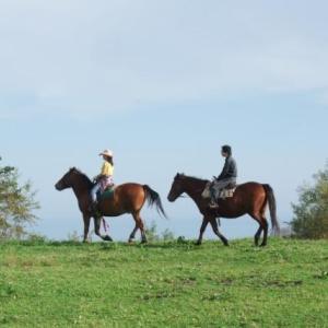 馬乗りが上手くなる為に物凄く大切な事