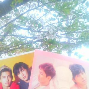 散り行く桜も美しい日光浴豆活免疫力レポ&夜勤後ファミマで&看板期間限定品御礼に続(4/11前編バグるため)