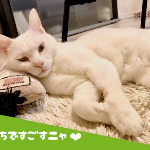 猫に学ぶ家での過ごし方♪