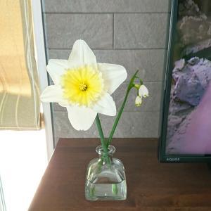 可愛いけど毒のお花🤗と色々。