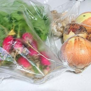 本日の収穫と、貰った野菜。