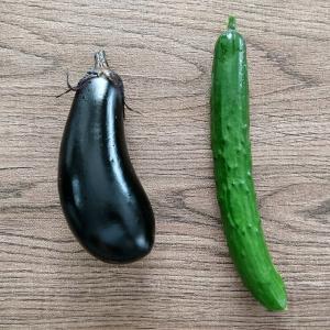 【夏風邪を】昨日と今日の収穫。【ひきました】