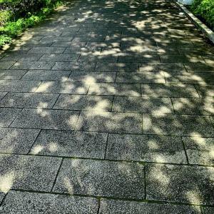 梅雨の雨の合間にお散歩