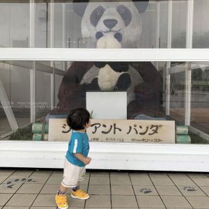 【iPhoneで子供を撮ろう】パンダが大好き!!