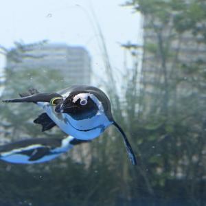 水族館で空飛ぶペンギンに遭遇!!
