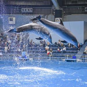 【水族館撮影】イルカのジャンプが撮りたい!!