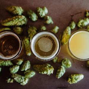 【ビール検定対策】ホップの品種を覚えよう!
