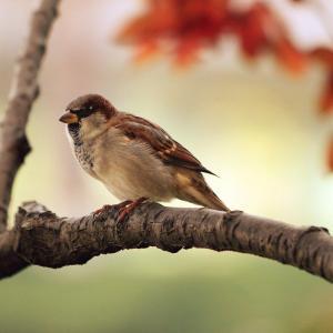 野鳥を通じ非日常を楽しめるジャパン・バードフェスティバル