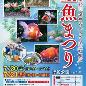 色とりどりの優雅な金魚!江戸川区金魚まつり