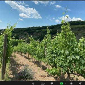 イタリア現地からイタリアワインを楽しく学ぶ