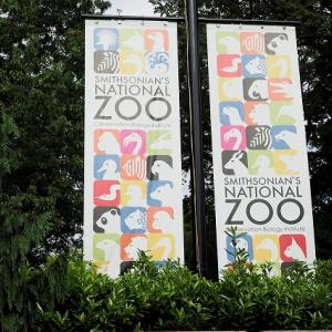【ワシントンD.C. 】お勧め国立動物園、ジャイアント・パンダの行方は