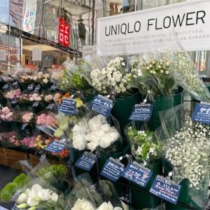 Uniqlo Flower(ユニクロフラワー)で気軽に花を楽しみませんか
