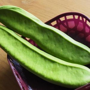 【珍しい野菜】なた豆は福神漬けの一部でした