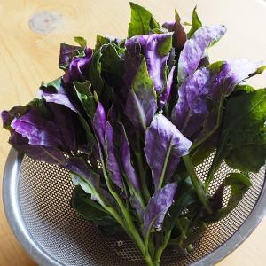 【珍しい野菜】ハンダマは不思議な、栄養価の高い野菜です