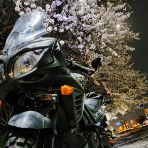 夜桜×バイク