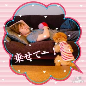 トロ姫日記♪ 恒例「今朝の筋肉枕」と「白目トロ姫」  皆さまのわんこ