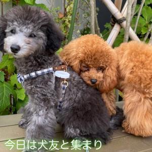 宇野トロ&エマ日記 今日は犬友と集まり♪ ジョンくんが…♪