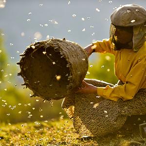 映画【ハニーランド 永遠の谷】あらすじキャスト見どころ!自然と人間の生き方を追ったドキュメンタリ-映画
