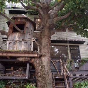 広尾のツリーハウスといえば、レ・グラン・ザルブルさん【オシャレ空間でランチ】