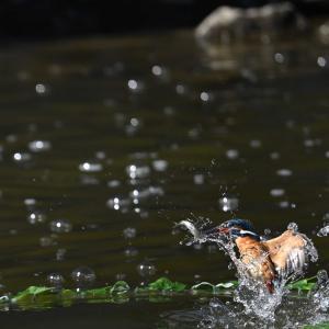 ダイブ餌を捕獲