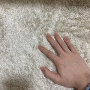 ニューカーペット。もふもふ。ふかふか。