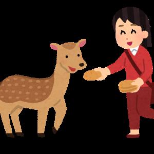 鹿さんごめんよ・・・初めての鹿肉pt.1 【閲覧注意】