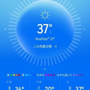 猛暑です!