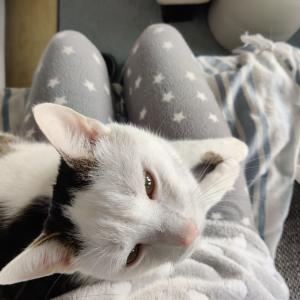 朝の猫のルーティーン