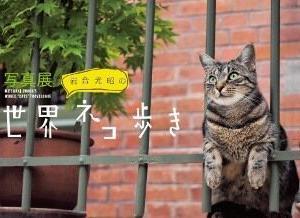 「世界ネコ歩き」も・・・