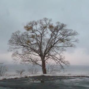 ORAEの幸せの木